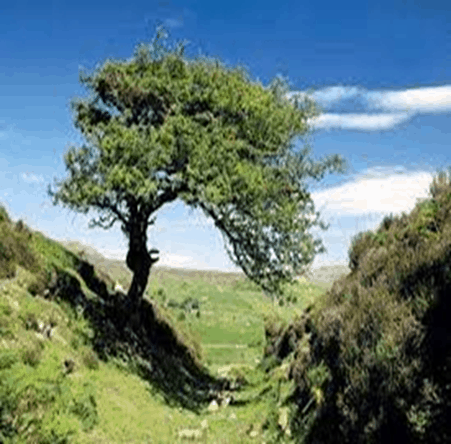 Fairy Tree of Life